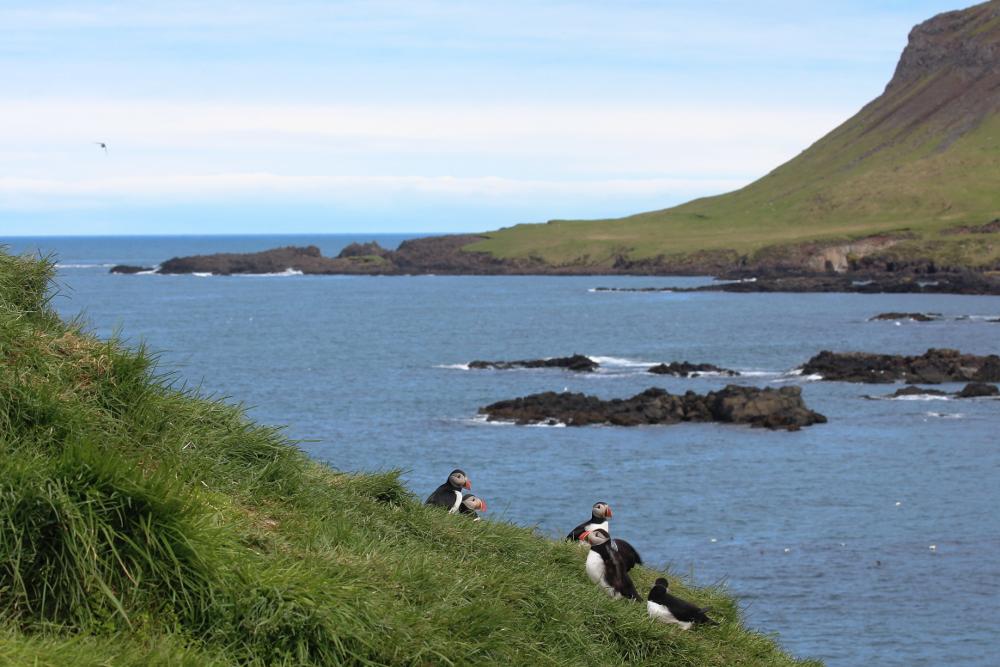 Landschaftsbild mit Puffins im Vordergrund
