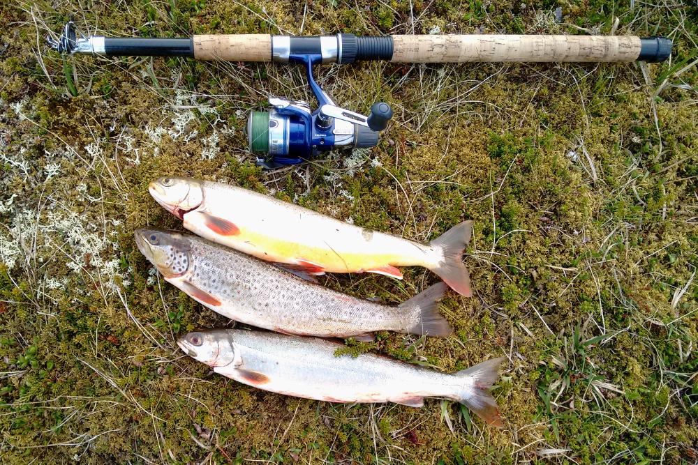 Fischfang