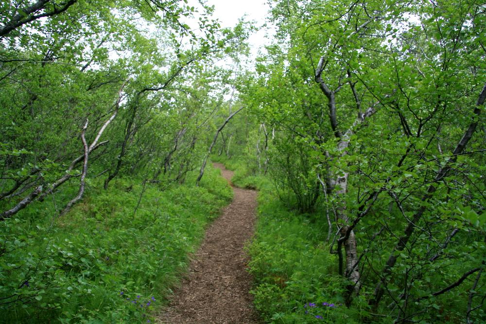 Wald beim Botnstjoern