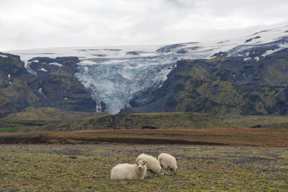 Am Rande des Mýrdalsjökull