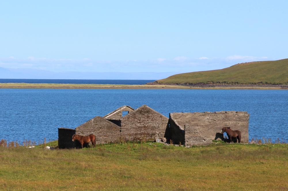Islandpferde vor Ruine auf Snæfellsnes